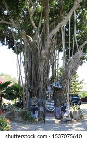 Sacred tree Ficus benghalensis wrapped in black and white fabric that drives away evil spirits. Hindu temple designed for sacrifices under a huge Banyan with airy roots. Religion on Bali island.