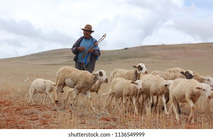 SACRED VALLEY PERU 11 22 2012: Shepherd and flock of sheep near Chinchero Sacred Valley Peru