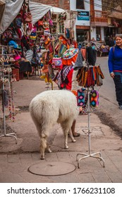 Sacred Valley/Peru - Aug 21 2019: Peruvian woman with an alpaca in the city of Pisac on Sacred Valley