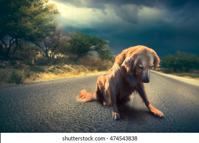 Sad, abandoned dog in the middle of the road / high contrast image