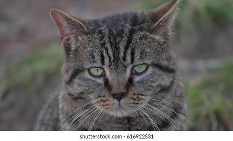 Sad angry cat with funny eyes sits the outdoor