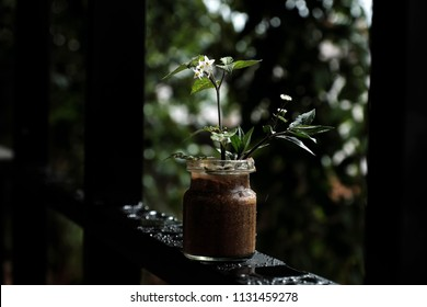 Sad background in dark colors background, jar of flower with white tiny flowers from grass on window frame and raindrop on window frame
