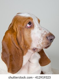 Sad Basset Hound looking up, retro style (selective focus on the eyes)