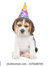 Sad Beagle puppy in birthday hat. isolated on white background