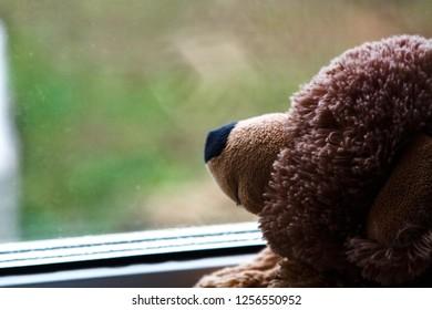 Sad bear near the window