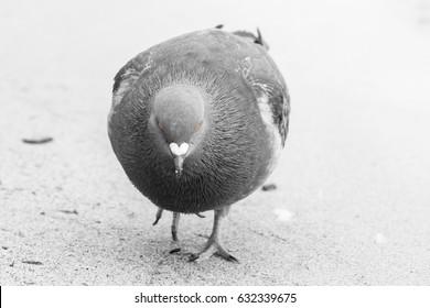 The sad bird