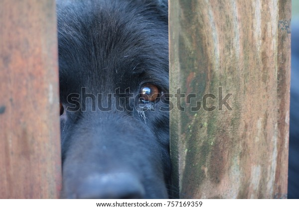Sad black dog eyes between bars. Animal abuse concept.