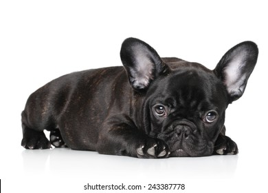 Sad black French bulldog puppy lying against white background