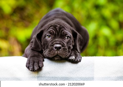 sad black puppy