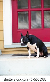 A sad Boston Terrier sitting by the front door of his home