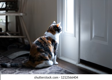 Sad, calico cat sitting, looking through small front door window on porch, waiting on hardwood carpet floor for owners, left behind abandoned