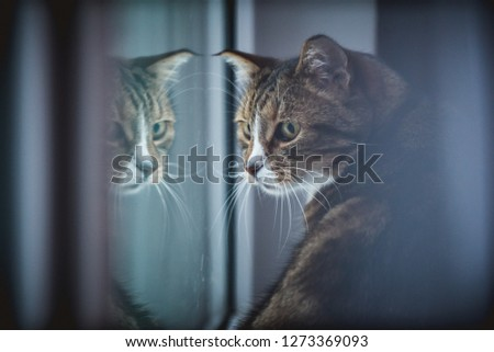 sad-cat-by-window-reflection-450w-127336