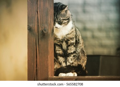 Sad cat. He sits and rests her head on a wooden beam.
