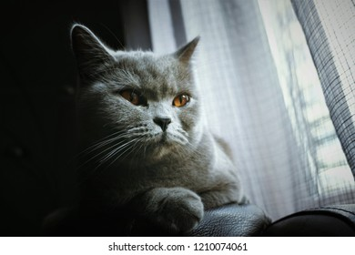 Sad cat is looking out the window, longing pet. Pet home alone waiting for the owner.