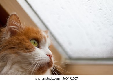 Sad cat looking of the window outside on the snowy street
