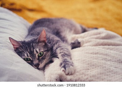 A sad cat is lying on the bed with a yellow blanket