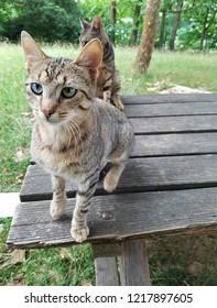 Sad cat with one blue eye