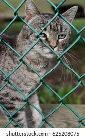 Sad cat waiting for adoption at a rescue shelter.