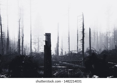 Sad death in the forest disappears in the mist
