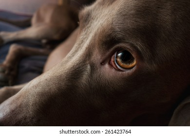 sad dog abandoned