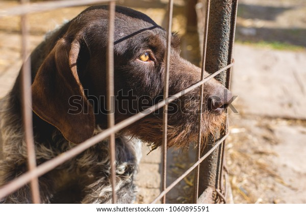 Sad dog behind the bars, Hunting dog with sad eyes