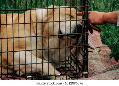 Sad dog behind in a cage and a hand of man