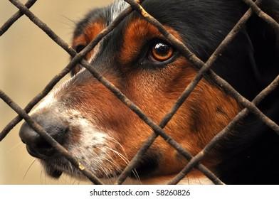 Sad dog behind the fence.