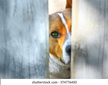 Sad dog behind a fence looking at you