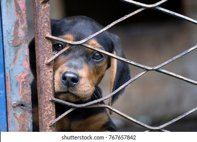Sad dog in cage watching the world from the other side of the fence