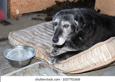 A sad dog with a frozen water bowl
