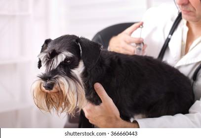 Sad dog having injection at veterinary ambulance