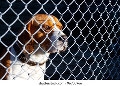 Sad dog locked in cage