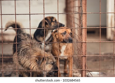 sad dog looking from the dog shelter caught by dog catchers who is housed in a cage at the public shelter built by the town hall for dogs on the street or dogs abandoned by dog owners