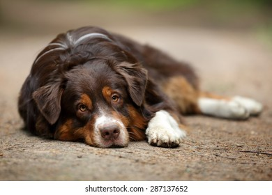Sad dog lying on the ground