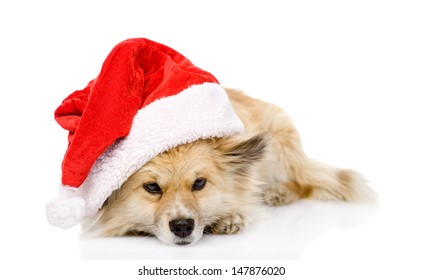 sad dog in red christmas Santa hat, isolated on white background