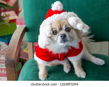 Sad dog in a Santa suit in a green chair