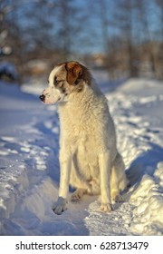 A sad dog stands in winter