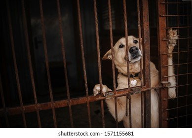 sad dog waiting in animal shelter cage