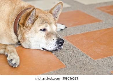 Sad dog waiting.It very sad