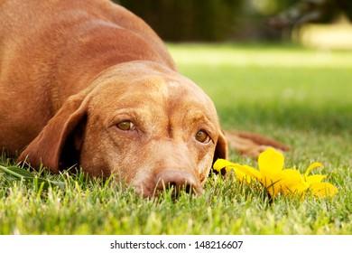 Sad doggy eyes