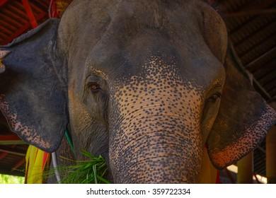 Sad elephant,Close-Up