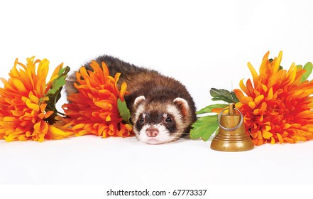 Sad ferret lie with orange flowers and gold bell