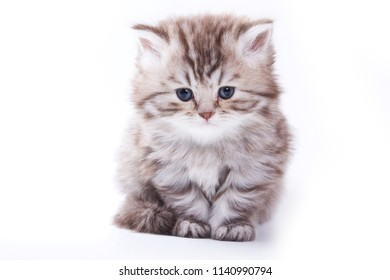 Sad fluffy gray kitten (isolated on white)