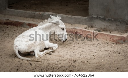 sad foal alone on street abandoned stock photo edit now 764622364