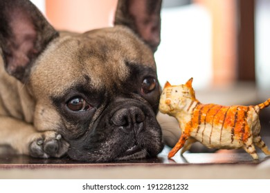 A sad french bulldog lies on the floor with a figurine of a ginger toy cat