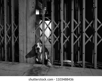 A sad gog is waiting for owner back home