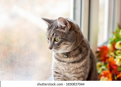Sad gray cat sits at the window and looks out into the street frozen glass against the background of autumn leaves. Pet theme with space to copy. Soft focus.