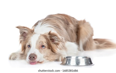 Sad hungry dog lies beside a bowl and asks food. isolated on white background