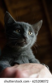 Sad kitten waiting for adoption at a rescue shelter.