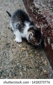 Sad little kitten on the wet concrete